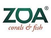 ZOA corals & fish